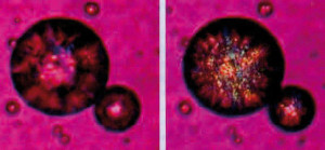Abb. 3: Fett kristallisiert bereits bei +5 Grad Celsius.
