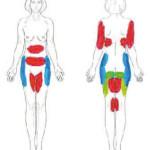 Abb. 7: Bevorzugte Behandlungszonen.